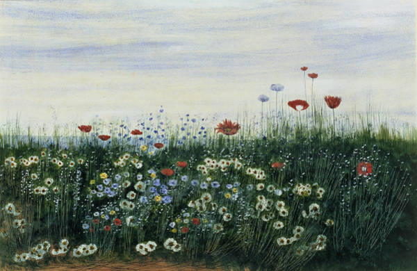 Grass Field Drawing - Poppies, Daisies And Other Flowers by Andrew Nicholl