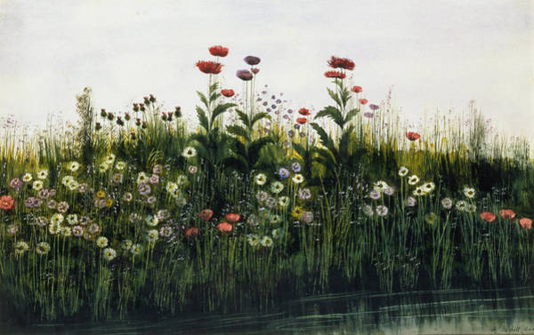 Wild Flowers Drawing - Poppies, Daisies And Thistles by Andrew Nicholl
