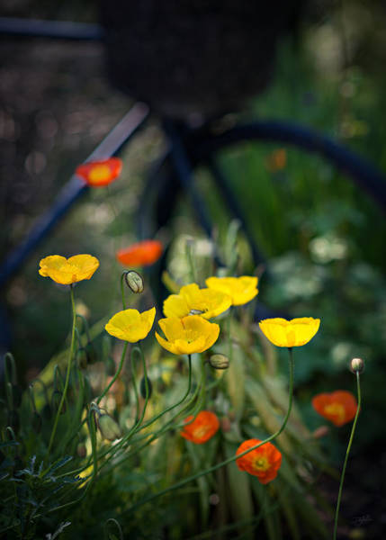 Art Print featuring the photograph Poppies by Doug Gibbons