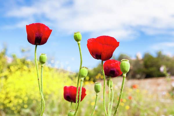 Costa Smeralda Photograph - Poppies by Frank Lukasseck