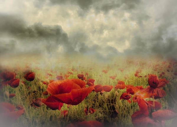 Mixed Media - Poppies From Heaven - Vintage by Isabella Howard