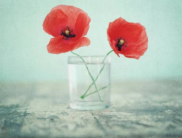 Glass Photograph - Poppies In A Glass, Still Life by By Julie Mcinnes