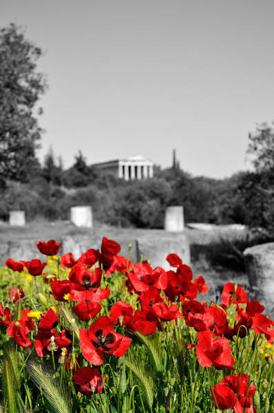 Wild Poppies Digital Art - Poppies In Athens by George Atsametakis