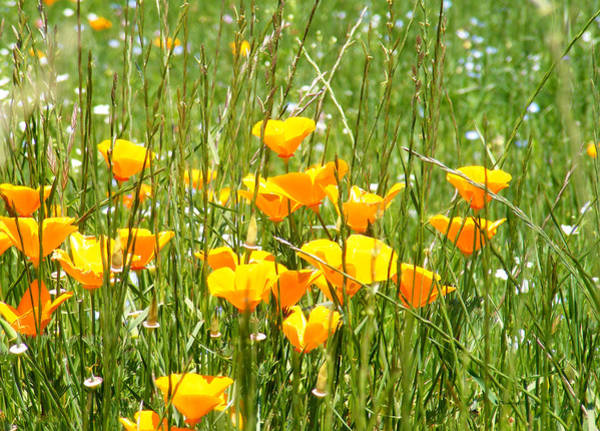 Photograph - Poppies In The Grass by Duane McCullough