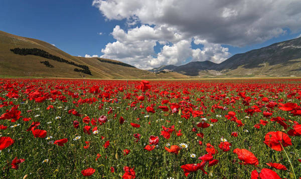 Wall Art - Photograph - Poppies by Manuelo Bececco Global Nature Photographer