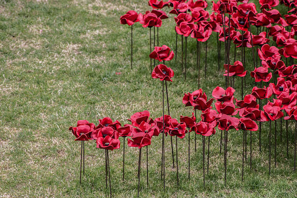 Remembrance Photograph - Poppies by Martin Newman
