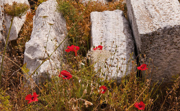 Photograph - Poppies On The Temple Island Of Delos Greece by Brenda Kean