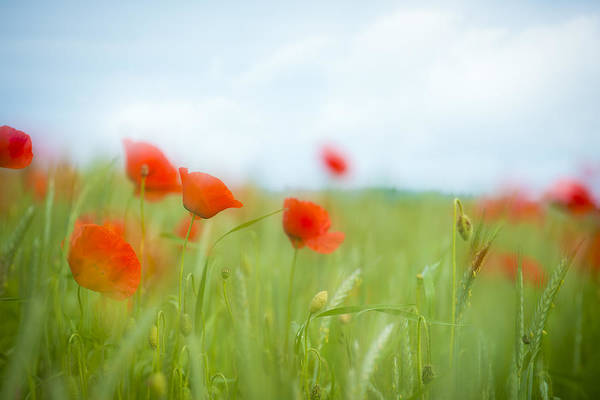 Hessen Photograph - Poppy - Heaven And Earth by Andy-Kim Moeller
