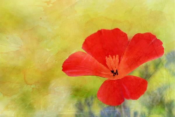 Wall Art - Photograph - Poppy Art  by Heidi Smith