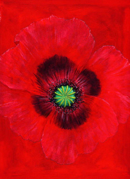Wall Art - Photograph - Poppy by MGL Meiklejohn Graphics Licensing