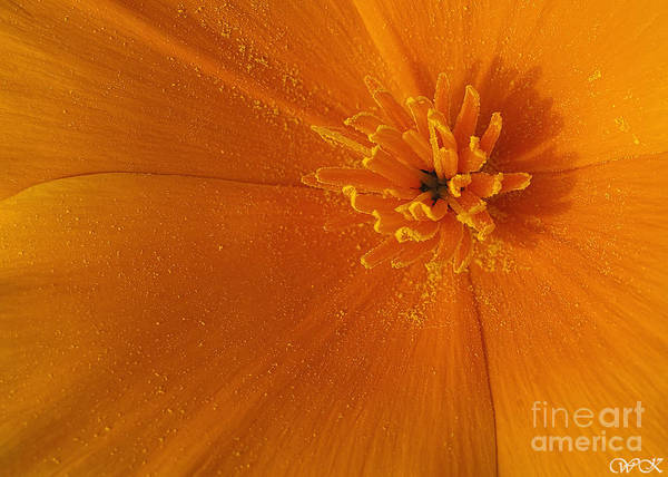 Photograph - Poppy Center by Wanda Krack