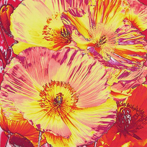 Poppies Digital Art - Poppy Extravaganza by Jane Schnetlage