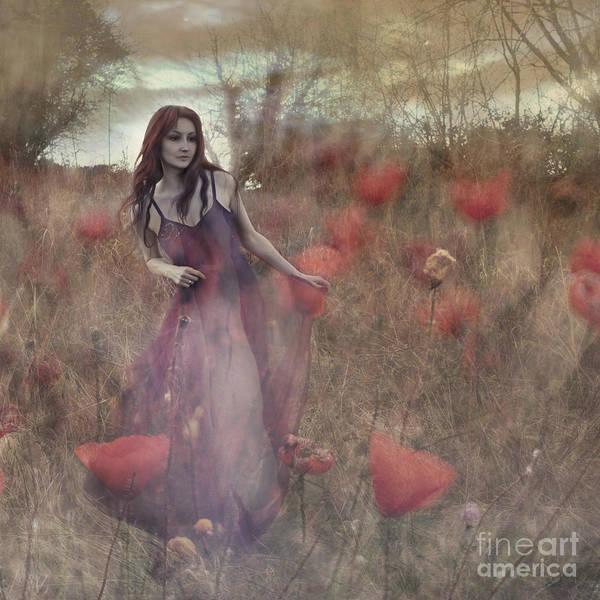 Wall Art - Photograph - Poppy Fairy by Angel Ciesniarska