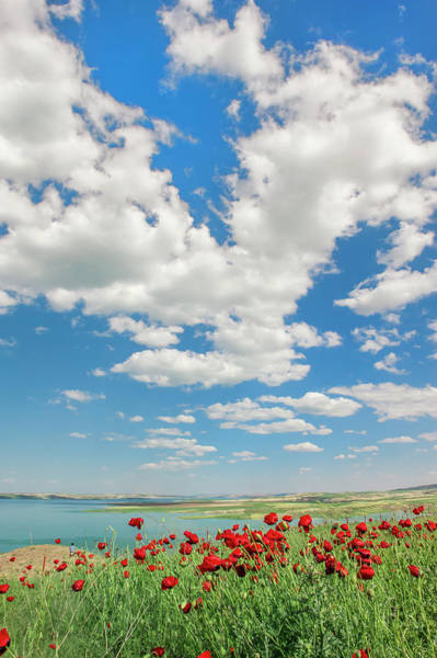 Eastern Anatolia Photograph - Poppy Field, Adiyaman Province, East by Gabrielle Therin-weise