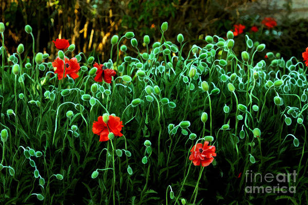 Wall Art - Photograph - Poppy Field Painterly by Scarlett Images Photography