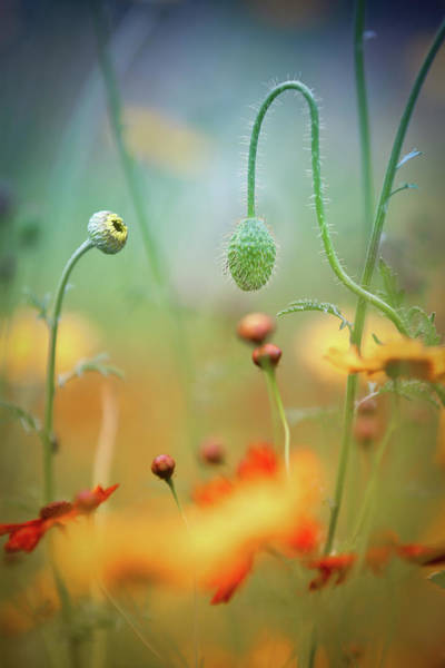 Wild Flowers Wall Art - Photograph - Poppy Field by Steve Moore