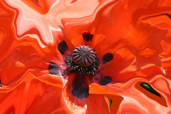 Photograph - Poppy Nest by Jim Baker