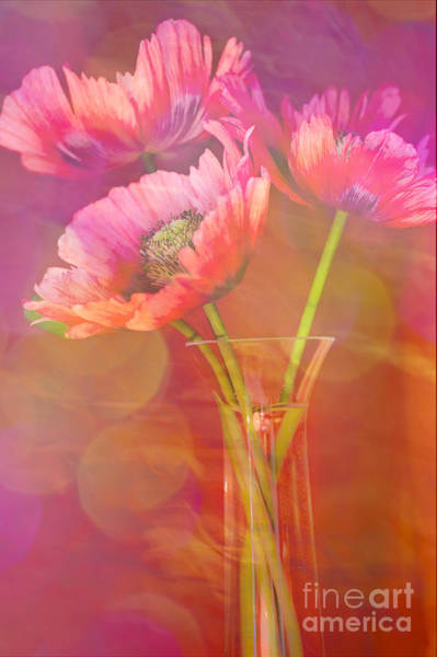 Lipstick Photograph - Poppy Passion by Jan Bickerton