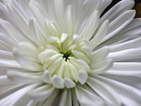 Photograph - Porcelain Beauty by Candice Trimble