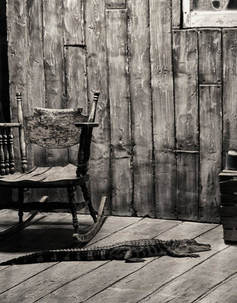 Photograph - Porch Alligator by Chris Flees
