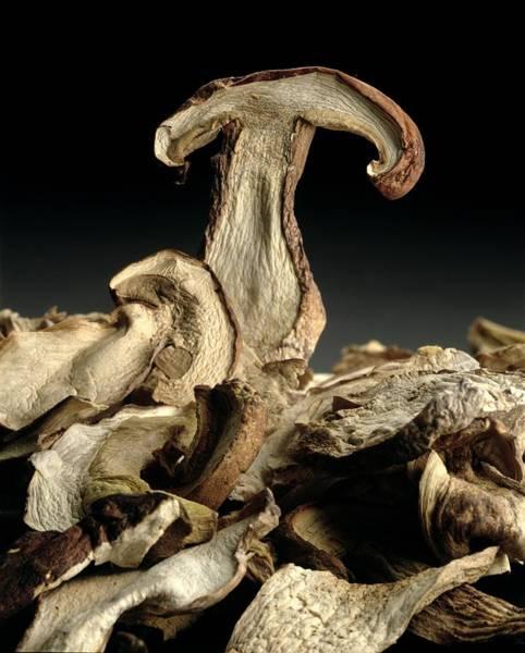 Wall Art - Photograph - Porcini Mushrooms 'golgotha' by Norman Hollands