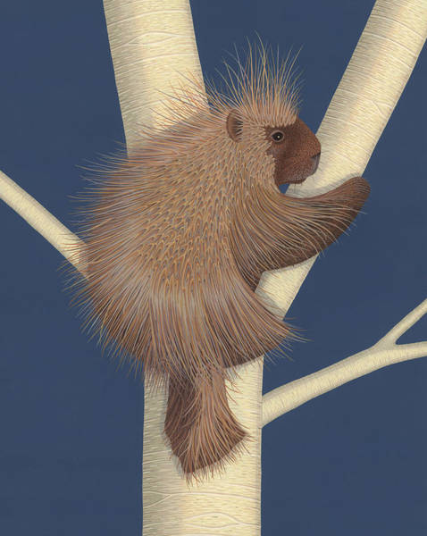 Wall Art - Painting - Porcupine by Nathan Marcy