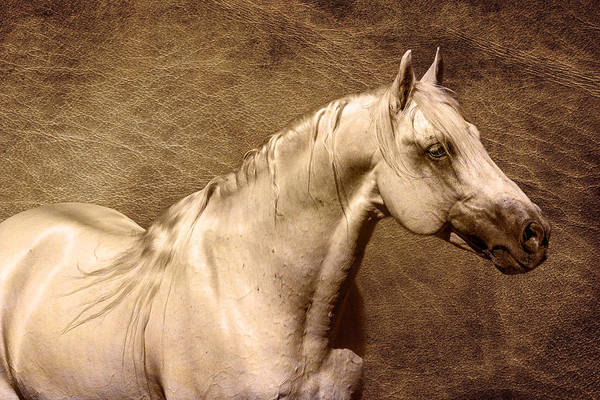 Photograph - Portait Of A Stallion by Wes and Dotty Weber