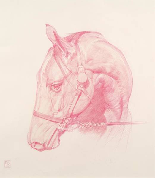 Equine Drawing - Portrait Head by Emma Kennaway