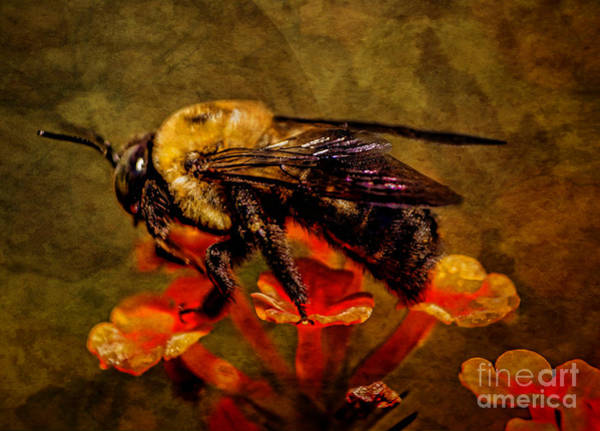 Portrait Of A Bee Art Print