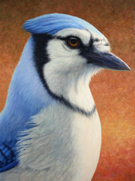 Blue Feather Wall Art - Painting - Portrait Of A Bluejay by James W Johnson