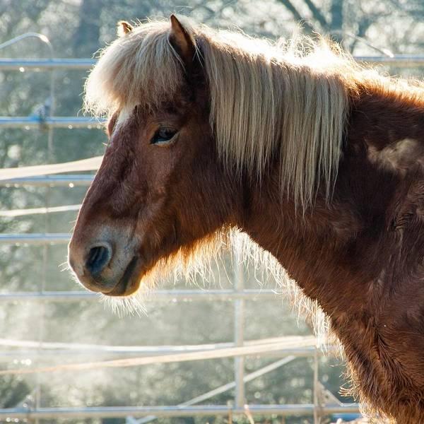 Portrait Photograph - Portrait Of A Brown Horse by Matthias Hauser