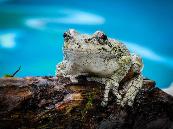 Photograph - Portrait Of A Frog by Frank Mari