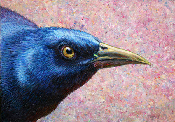 Songbird Painting - Portrait Of A Grackle by James W Johnson