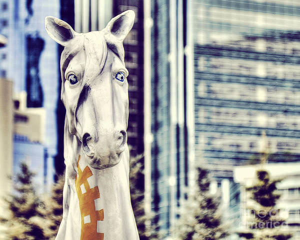 Something Different Photograph - Portrait Of A Horse by Emily Kay