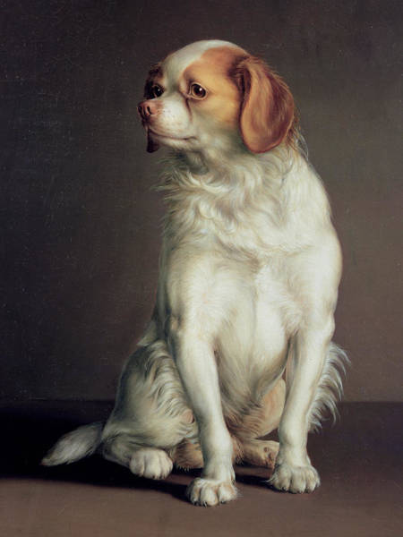 Doggy Wall Art - Painting - Portrait Of A King Charles Spaniel by Louis Leopold Boilly