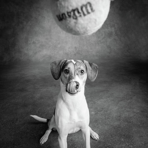 Wall Art - Photograph - Portrait Of A Mixed Dog Playing by Animal Images