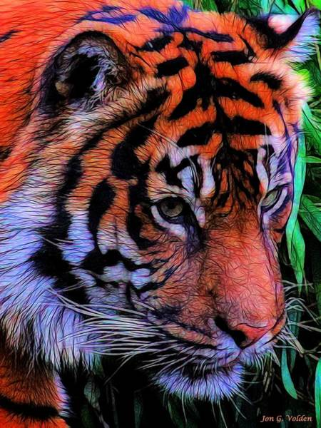 Painting - Portrait Of A Tiger by Jon Volden