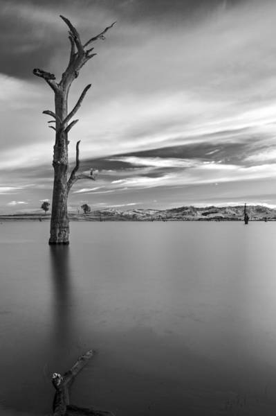 Photograph - Portrait Of Solitude by Mark Lucey