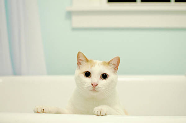Cat Photograph - Portrait Of White Cat by Melissa Ross