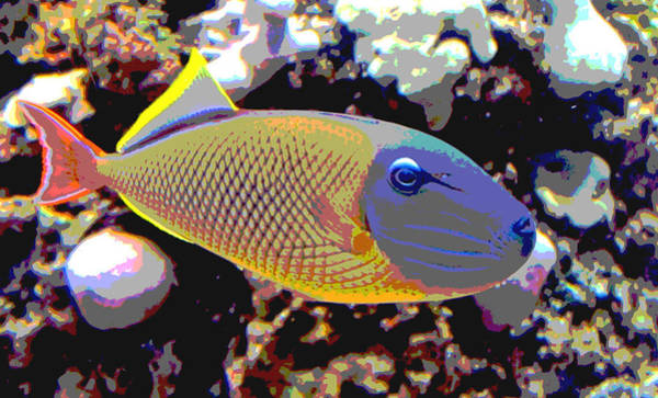 Photograph - Posterized Trigger Fish by Tony and Kristi Middleton