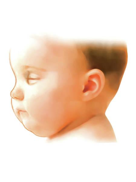 Atlas Of Human Anatomy Wall Art - Photograph - Postpartum Gestational Age Assessment by Asklepios Medical Atlas