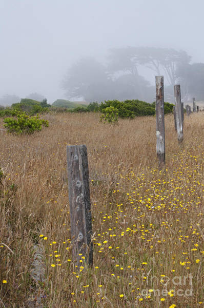 Photograph - Posts Along The Way by Lula Adams