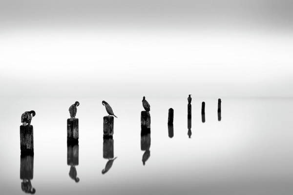 Sea Bird Photograph - Posts With Birds by George Digalakis