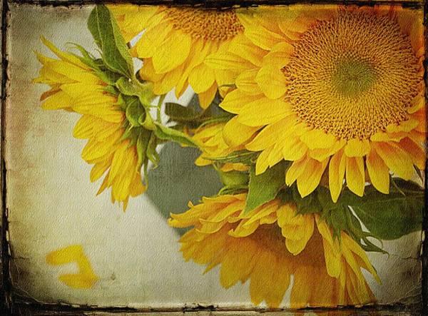 Sunflowers In A Vase Photograph - Pot Of Gold by Stephanie Calhoun