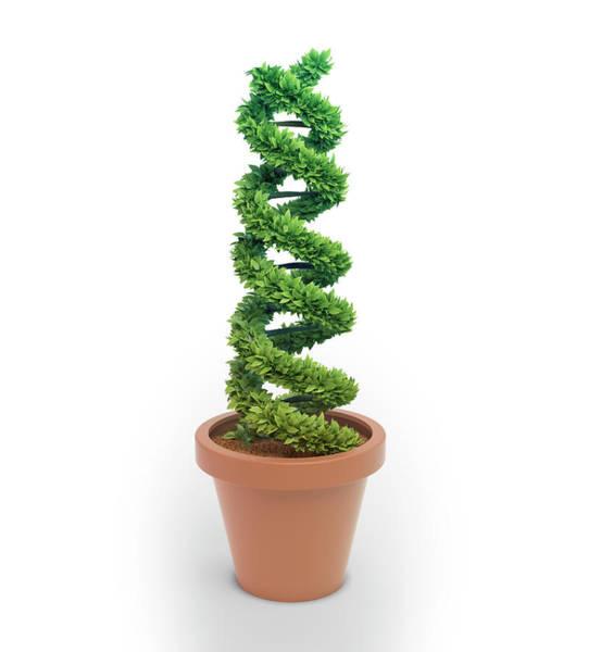 Biological Illustration Wall Art - Photograph - Pot Plant In Shape Of Dna by Andrzej Wojcicki