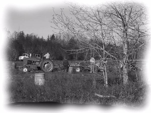 Aroostook County Photograph - Potato Harvest 1 by Gene Cyr