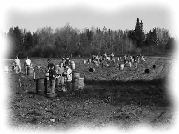 Aroostook County Photograph - Potato Harvest 2 by Gene Cyr