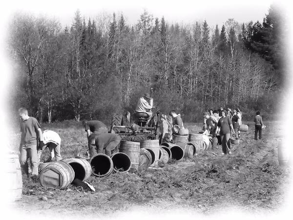 Aroostook County Photograph - Potato Harvest 21 by Gene Cyr