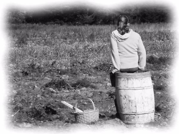 Aroostook County Photograph - Potato Harvest 9 by Gene Cyr