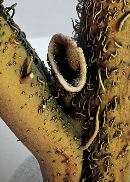 Potato Photograph - Potato Leaf by Stefan Diller
